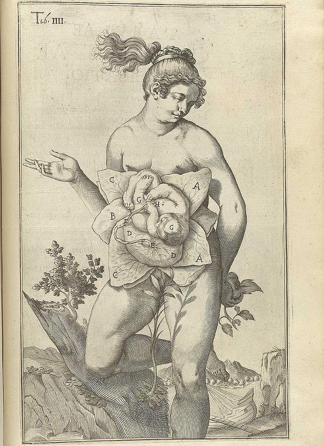 Development Of The Fetus. Female Figure Photograph