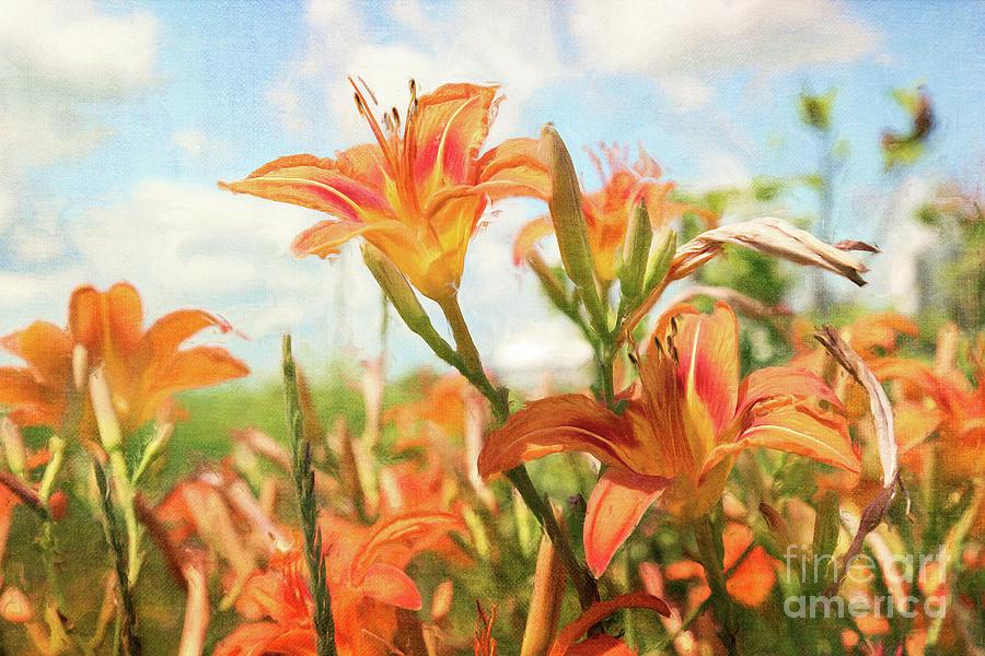 Digital Painting Of Orange Daylilies Photograph