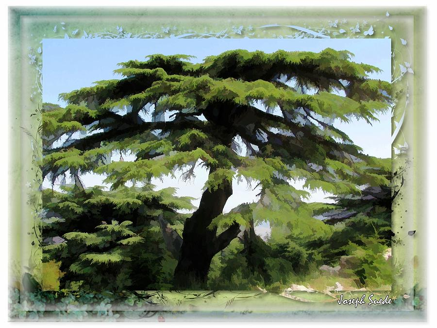 Do-00512 Cedar Forest Digital Art