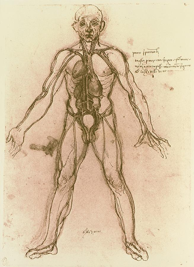 Drawing Of Human Venous System (leonardo Da Vinci) Photograph  - Drawing Of Human Venous System (leonardo Da Vinci) Fine Art Print
