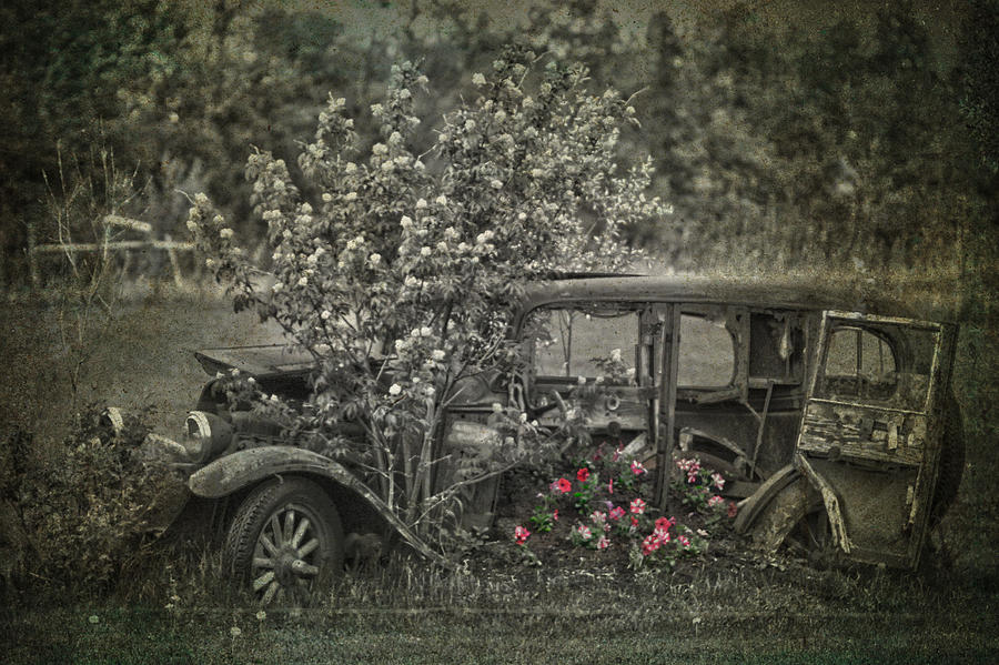 Driven To Find Love  Photograph  - Driven To Find Love  Fine Art Print