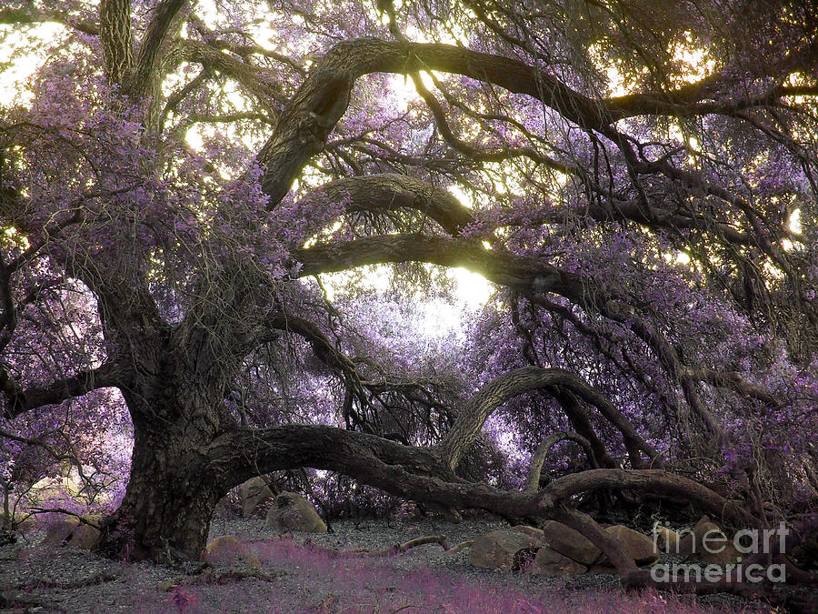 Fairy Tree Photograph
