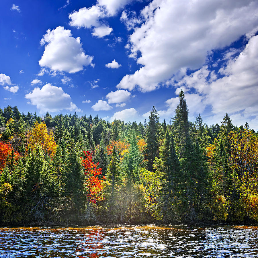 Fall Forest In Sunshine Photograph