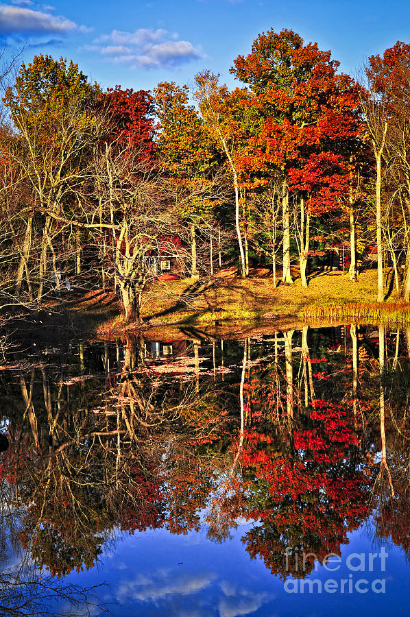 Fall Forest Reflections Photograph
