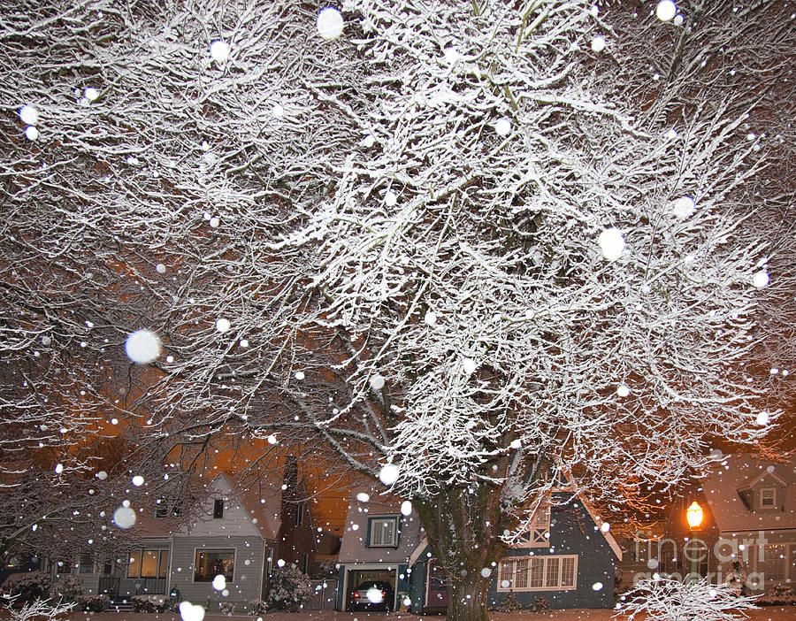 Falling Snow In A Neighborhood Photograph  - Falling Snow In A Neighborhood Fine Art Print