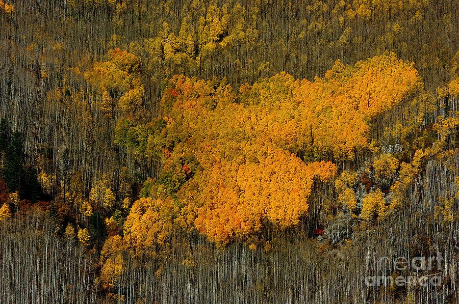 Photography Photograph - Fine Art Of Nature by Vicki Pelham