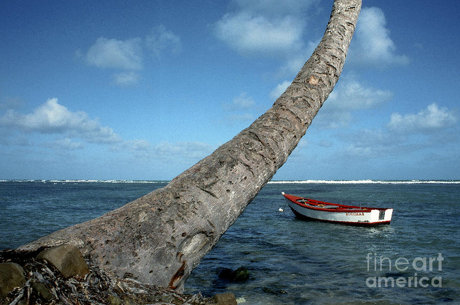 Fishing Boat And Palm Trunk Photograph
