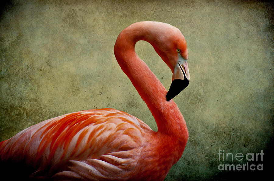 Flamingo Digital Art  - Flamingo Fine Art Print