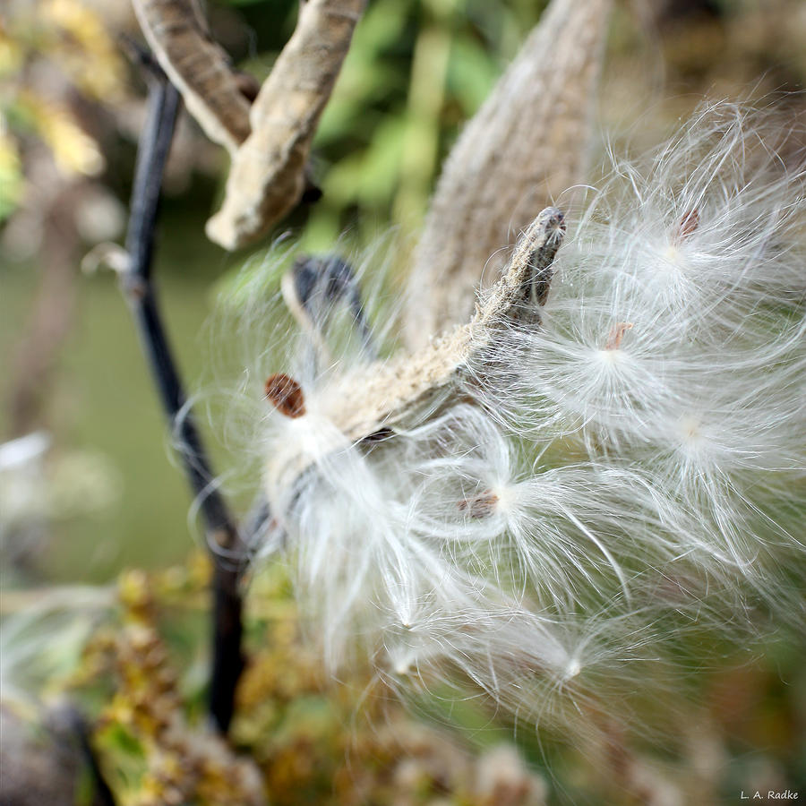 Flight Of The Milkweed Photograph