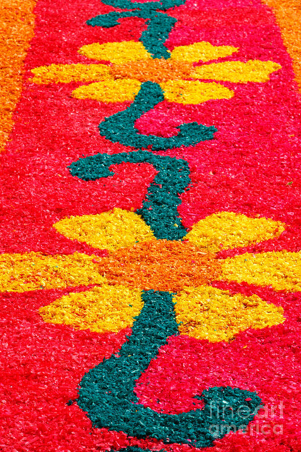 Flower Carpets Photograph  - Flower Carpets Fine Art Print