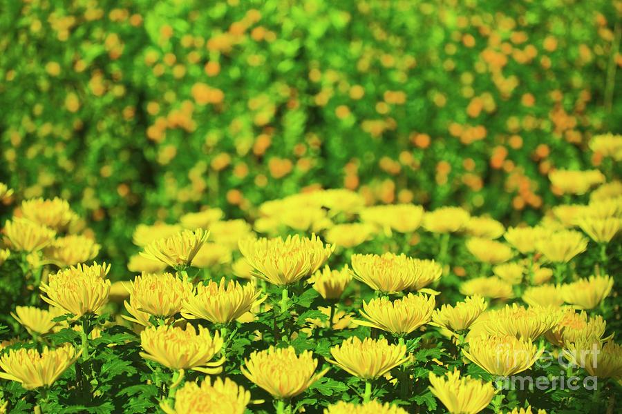 Flower Market Photograph