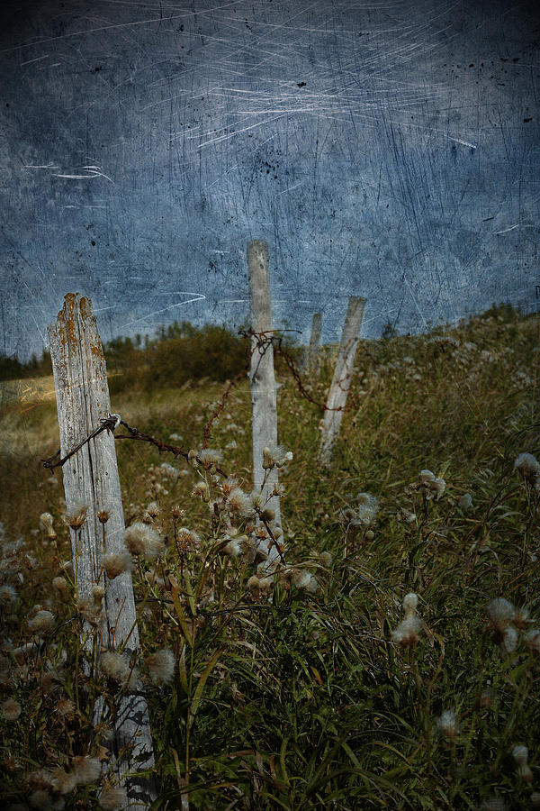 Follow  Photograph  - Follow  Fine Art Print