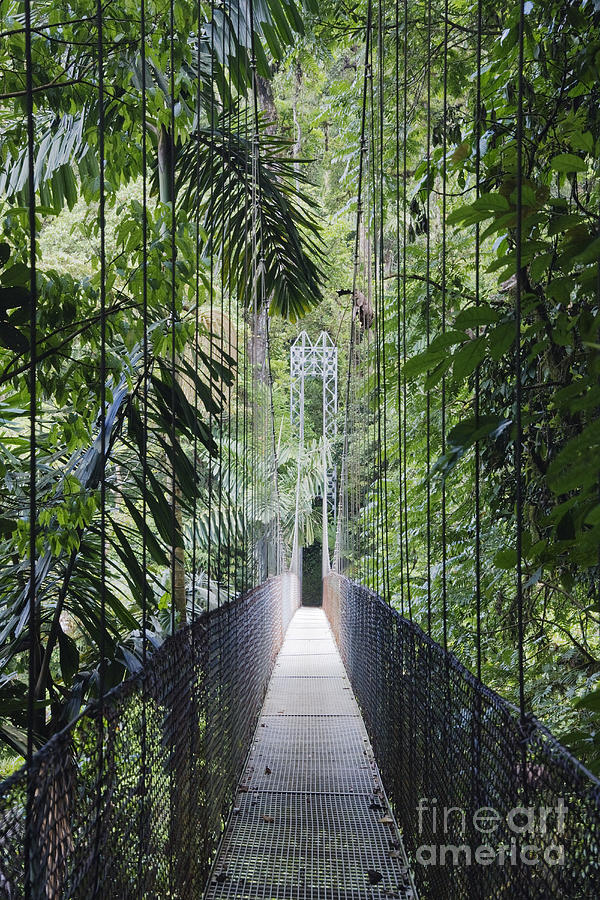 Footbridge In Costa Rican Forest Photograph