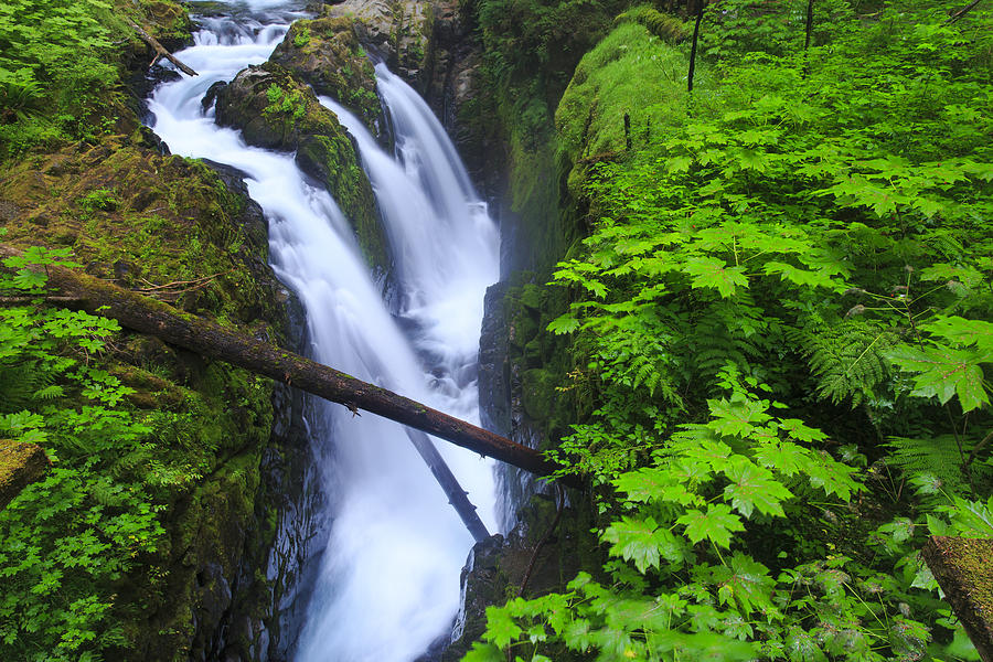 Horizontal Photograph - Forest And Stream In The Olympic Forest by Gavriel Jecan