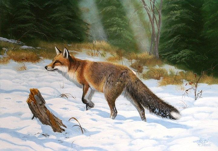 Fox Painting  - Fox Fine Art Print