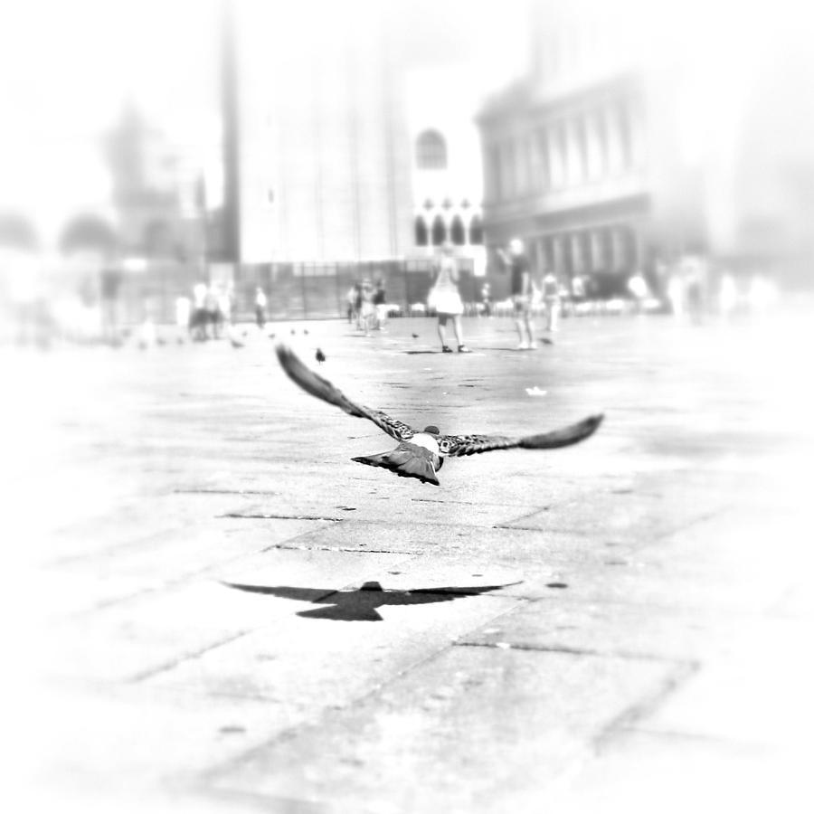 Freedom Photograph
