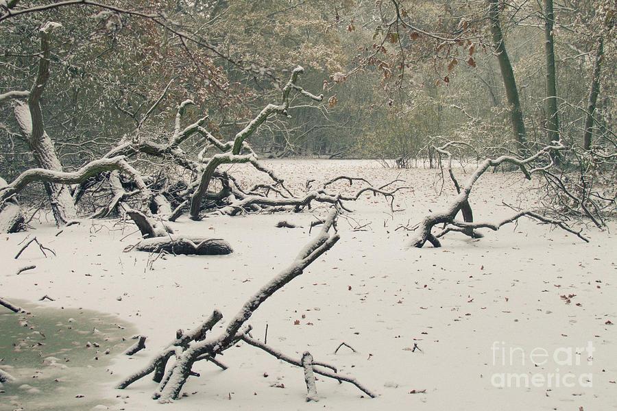 Frozen Fallen Photograph