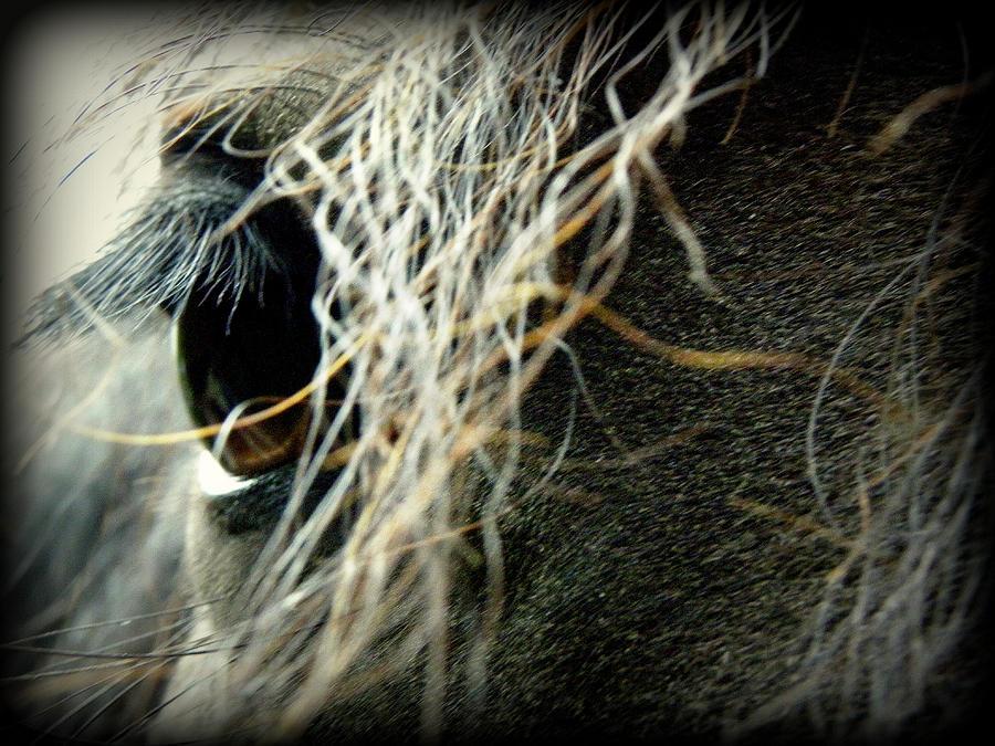 Friesian Horse Photograph - Gracie by Kim Galluzzo Wozniak