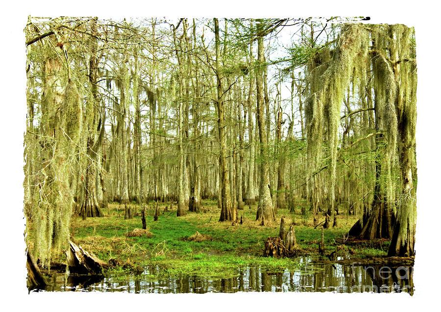 Grand Bayou Swamp  Photograph