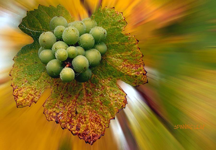 Grapes Photograph