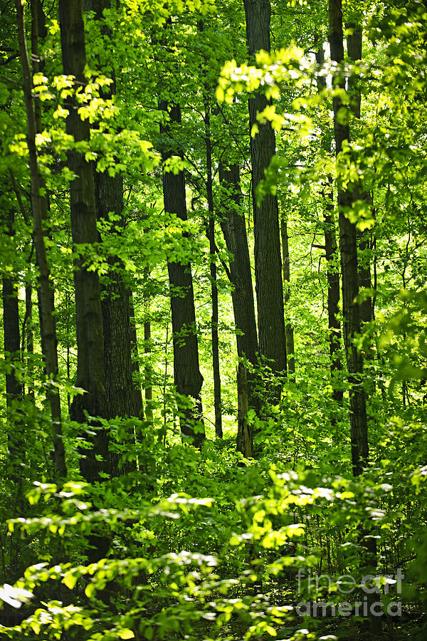 Green Spring Forest Photograph  - Green Spring Forest Fine Art Print