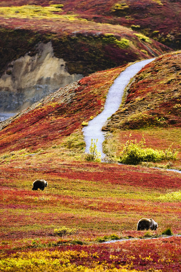 Denali National Park and Preserve, Alaska.