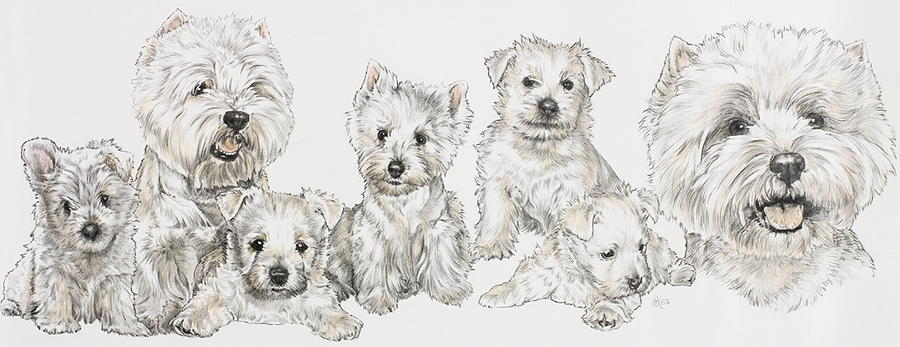 Growing Up West Highland White Terrier Drawing  - Growing Up West Highland White Terrier Fine Art Print