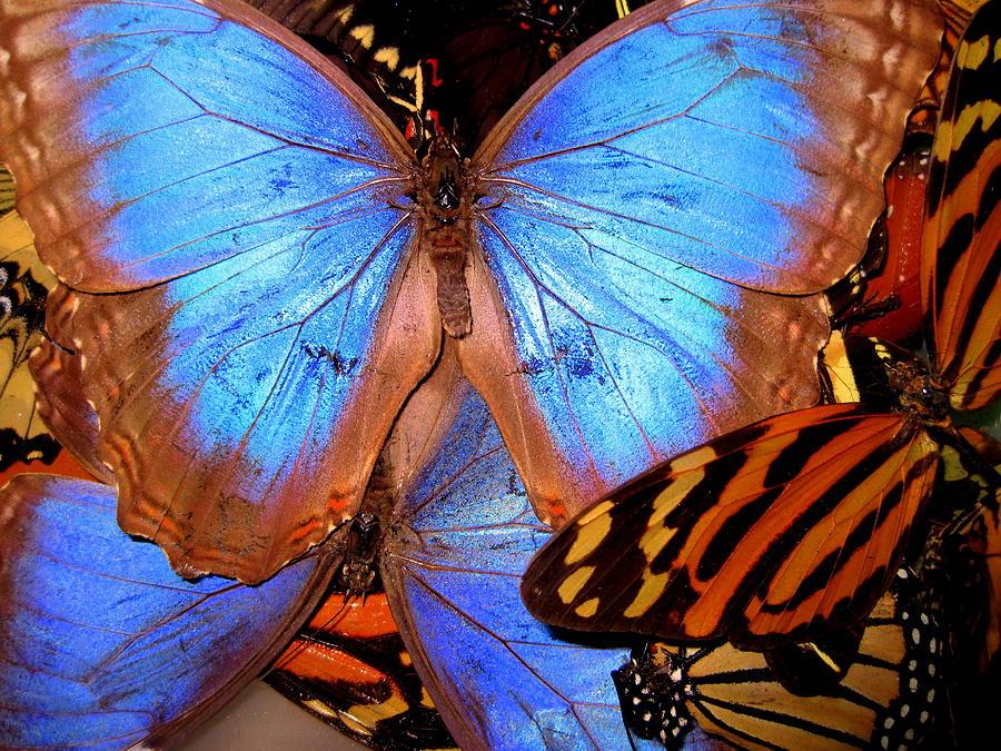 Guatemala Butterflies Pyrography