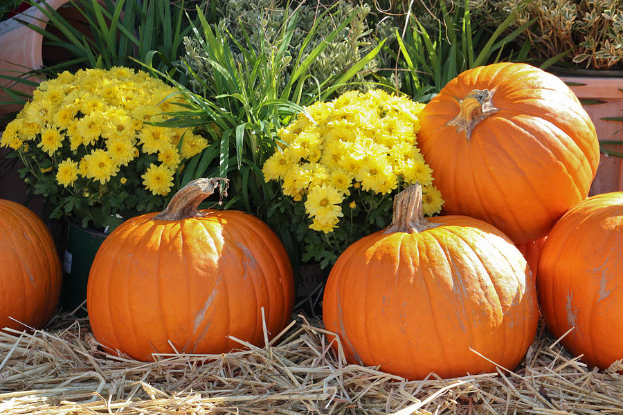 Harvest Time Photograph By Heidi Smith