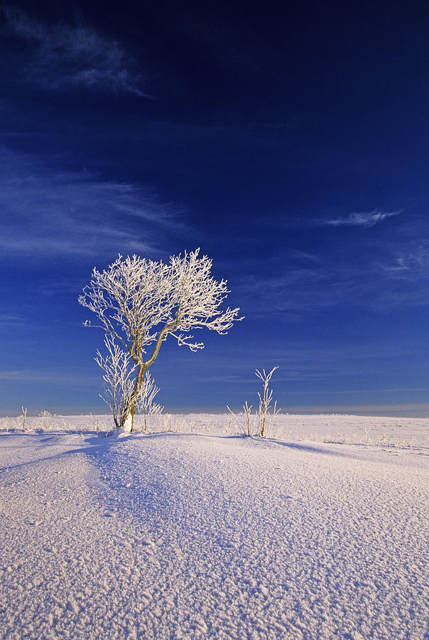 Calm Photograph - Hoar Frost On Trees, Bungay, Prince by John Sylvester