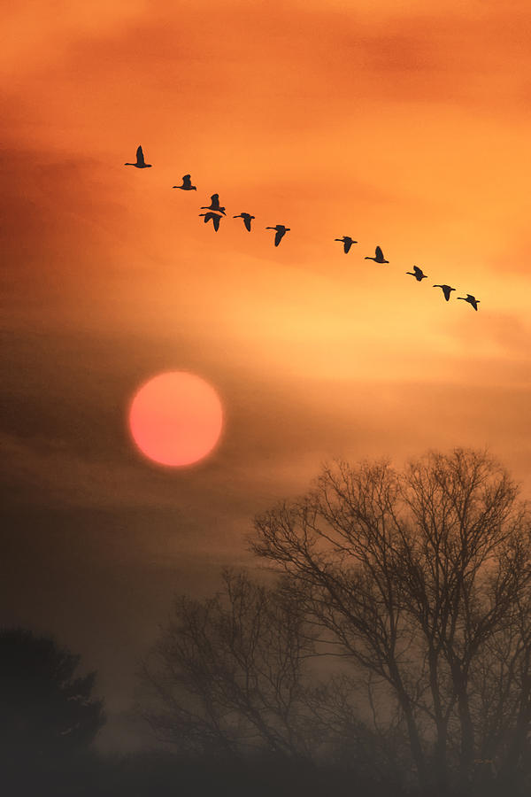 Nature Photo For Sale Photograph - Hot Summer Flight by Tom York Images
