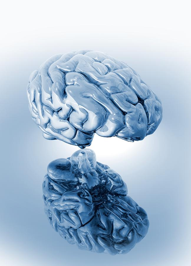Human Brain, Artwork Photograph  - Human Brain, Artwork Fine Art Print