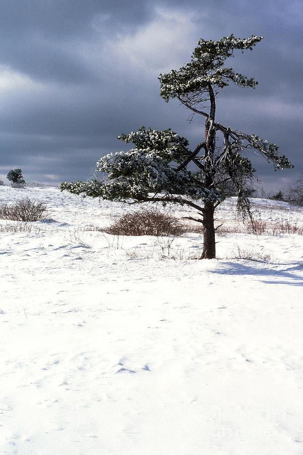 Ice Encrusted Tree Photograph - Iced Tree Shenandoah National Park by Thomas R Fletcher