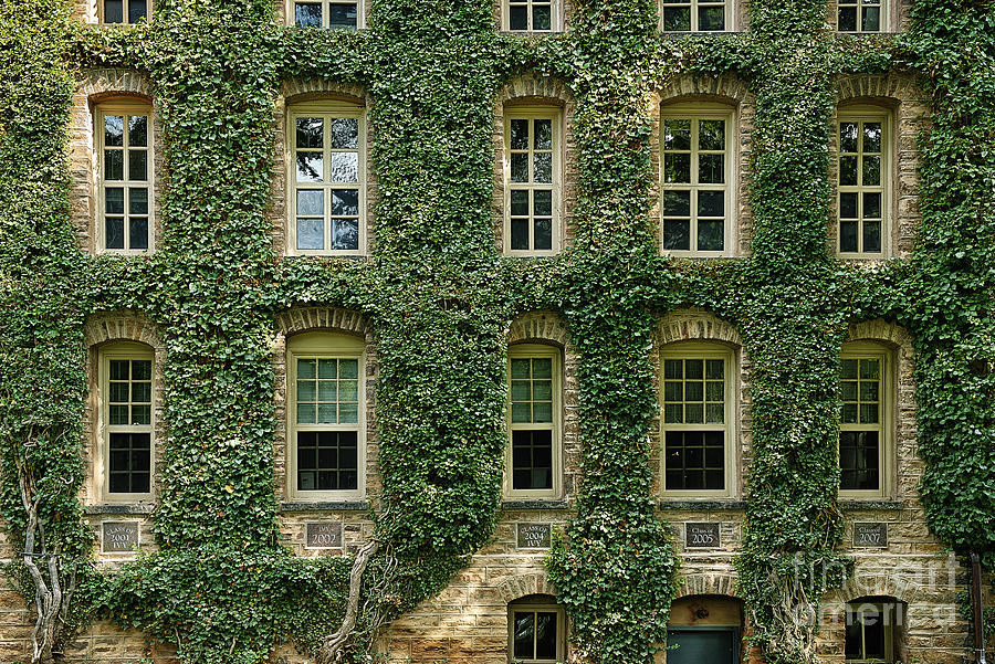 Ivy League Photograph  - Ivy League Fine Art Print