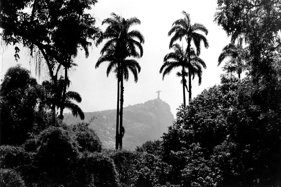 Jardim Botanico - Rio De Janeiro Photograph