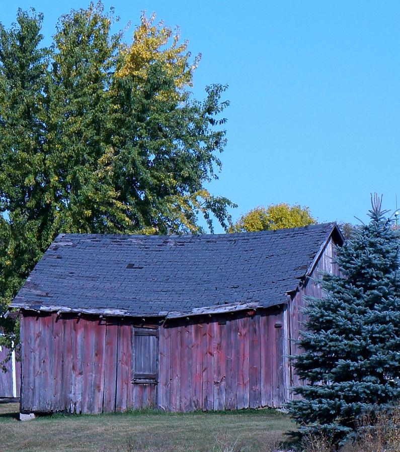 Red Barn Photograph - Just Past Prime by Kristine Bogdanovich