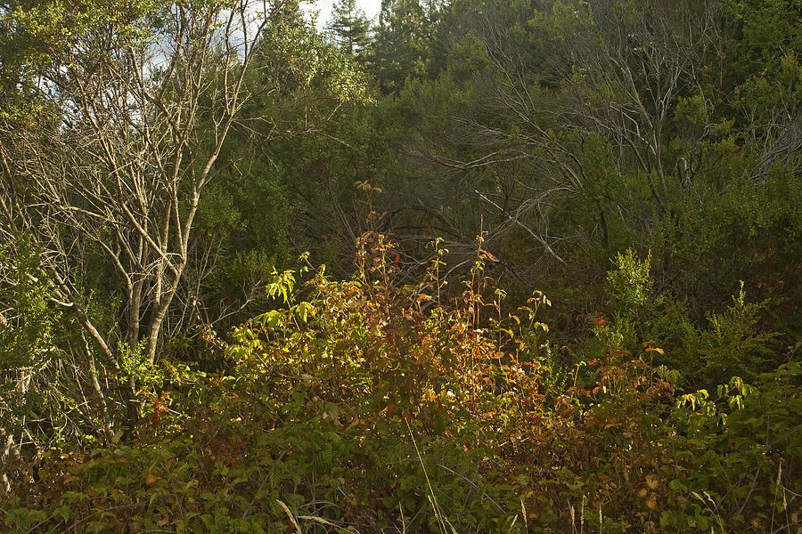 Last Of The Poison Oak Photograph  - Last Of The Poison Oak Fine Art Print