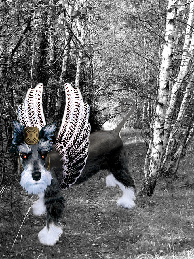 lil Angels Schnauzer of Oz Photograph  - lil Angels Schnauzer of Oz Fine Art Print