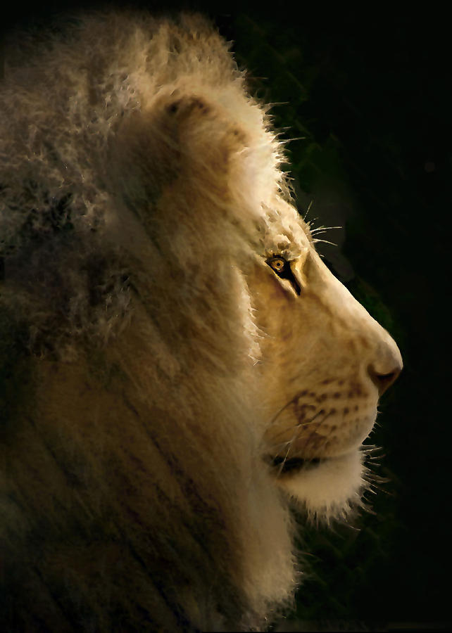 Lion Of Judah II Photograph