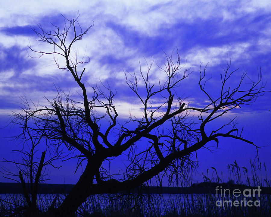 Lone Tree Blues Photograph  - Lone Tree Blues Fine Art Print