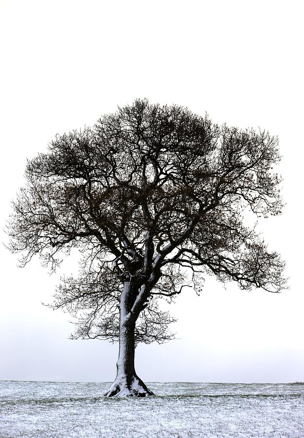 Lone Tree In Field Photograph