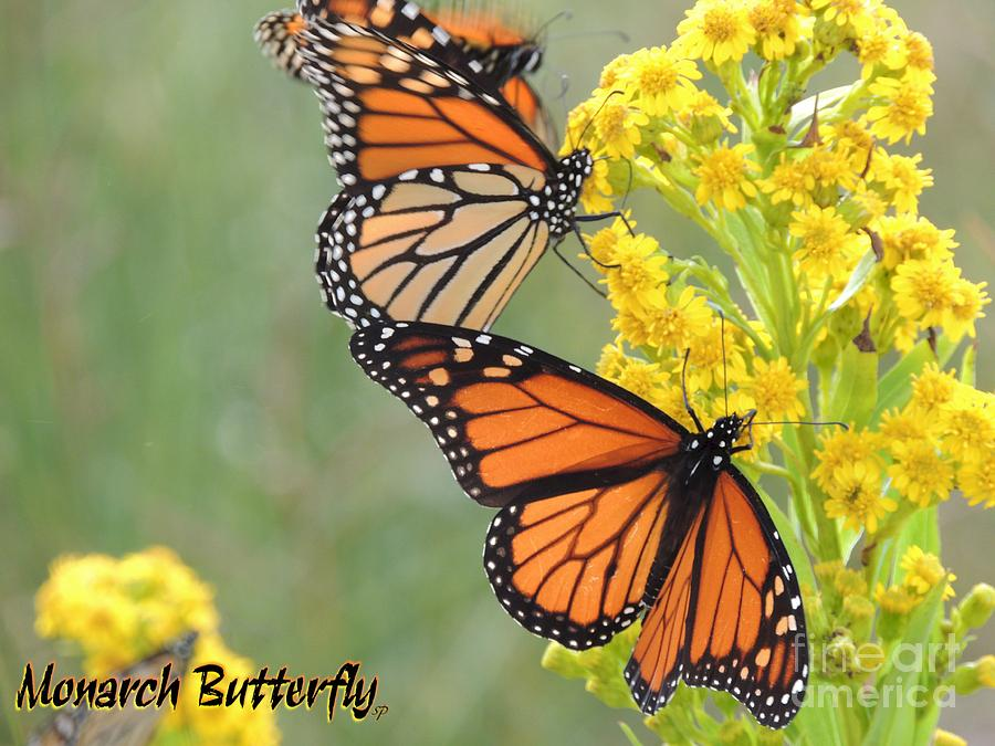 Monarch Butterfly Digital Art  - Monarch Butterfly Fine Art Print