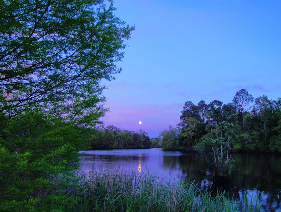 Moon Over The Bayou Photograph