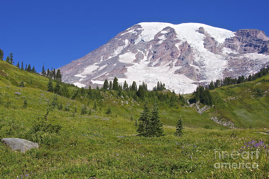 Mount Rainier Meadow Photograph  - Mount Rainier Meadow Fine Art Print