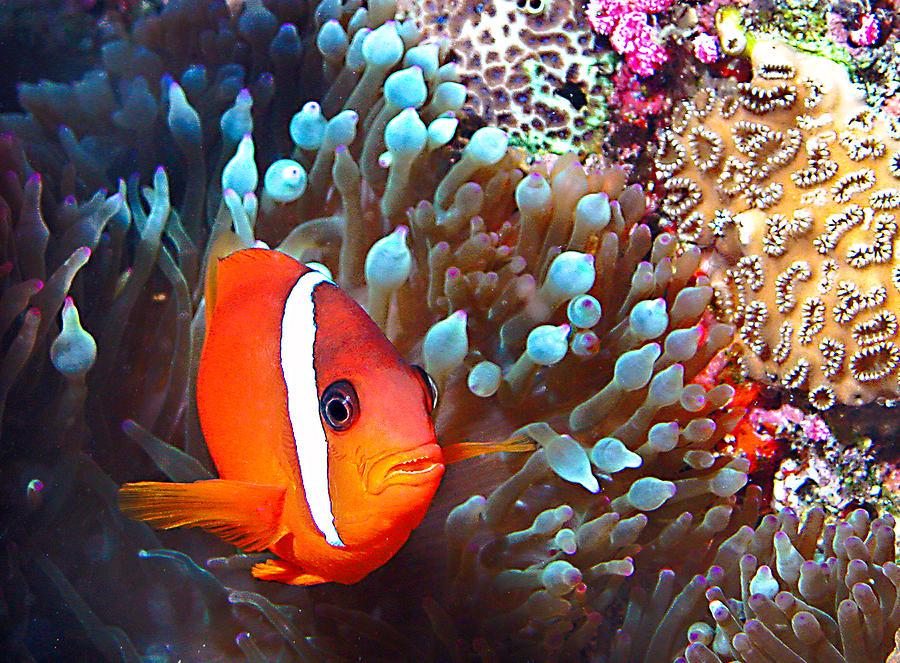Nemo Photograph