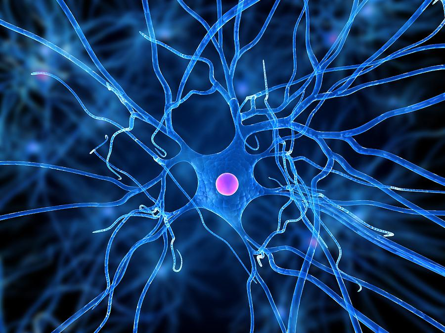 nerve cells Facts about nerve cells will inform you about the primary components of the nervous system nerve cells are also known as neurones or neurons they are cells that carry messages through an electrochemical process around your body.