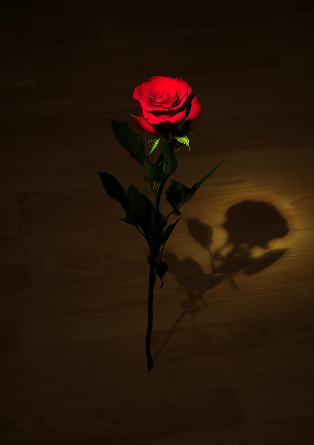 One Red Rose Photograph