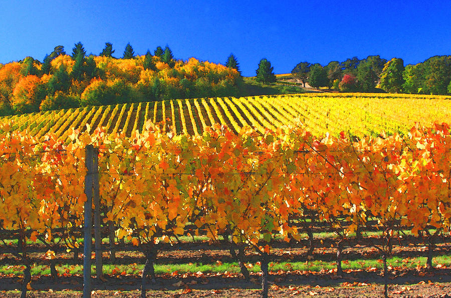 Oregon Wine Country Photograph  - Oregon Wine Country Fine Art Print