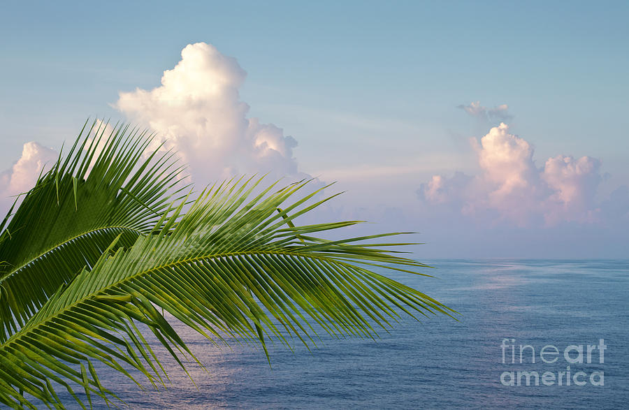 Palm And Ocean Photograph