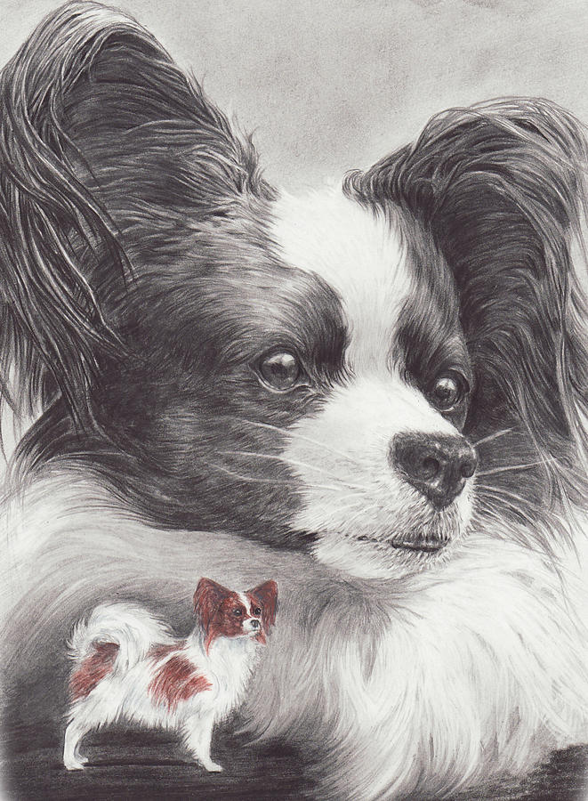 Papillon Drawing